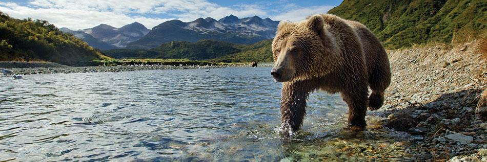 Dix raisons de faire une croisière en Alaska